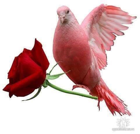 Lule dhe vetëm lule! - Faqe 2 NhyWC5Z2RPSkXyl7T2Rv47UOF_FwT2AJOMwvV-wU-V6kgUXu45IlIA==